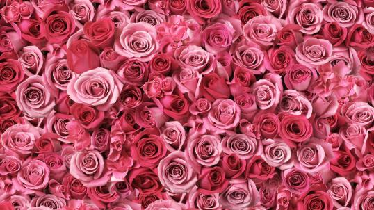 large pattern of pink roses
